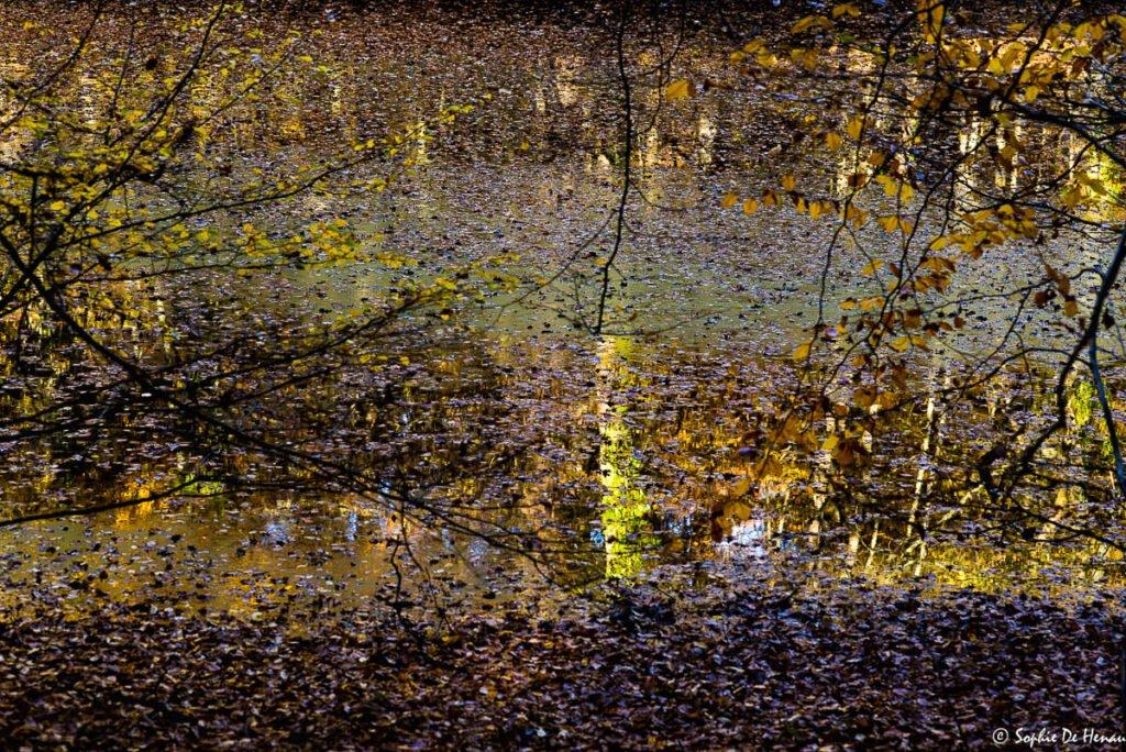 automne mélangé - sophie de ehnau
