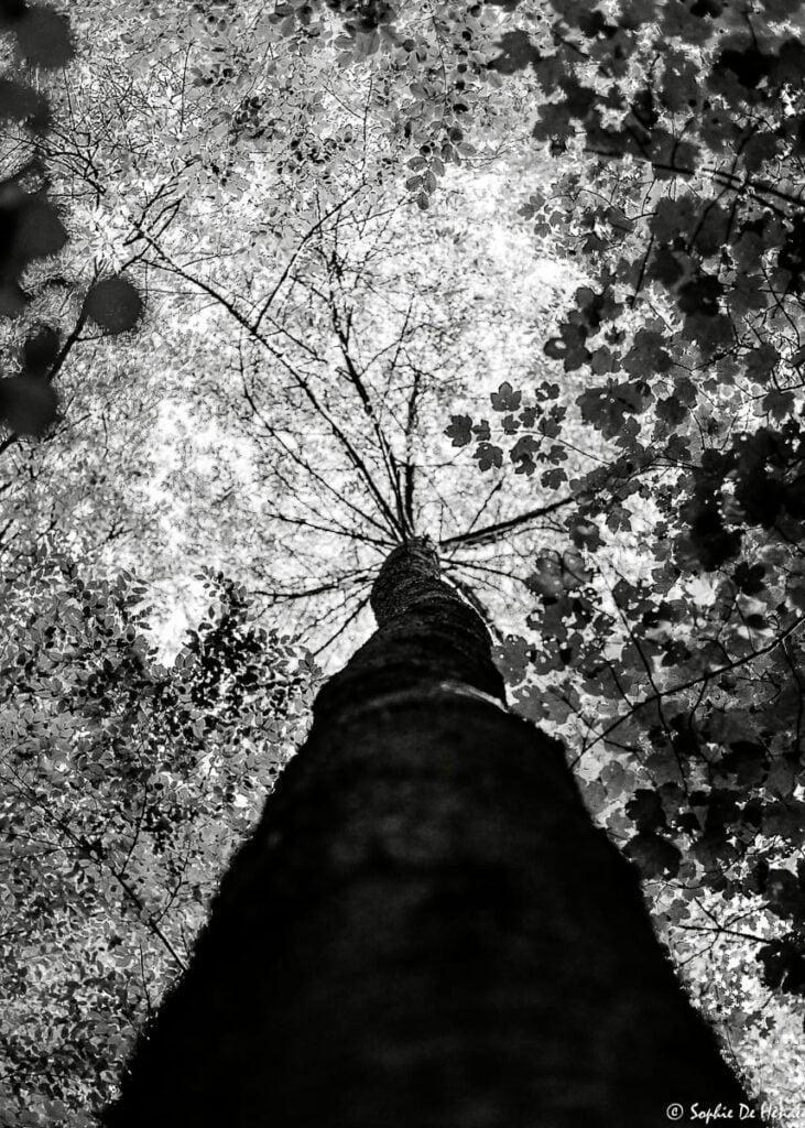 roots - sophie de henau